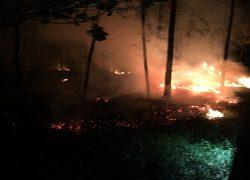 brennende Waldfläche